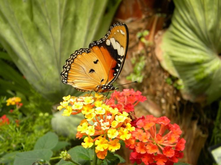 Jardin aux papillons vannes r cr atiloups - Images de papillon ...