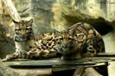 zoo-pont-scorff-sortie-famille