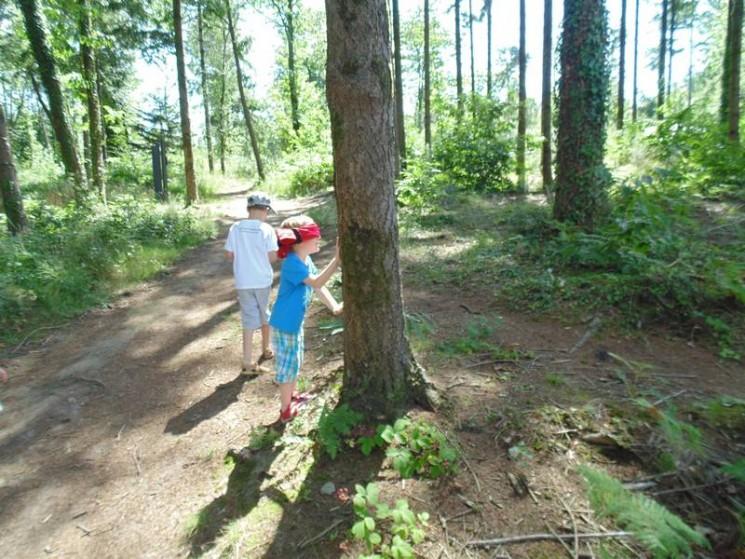Jeu : trouver son arbre