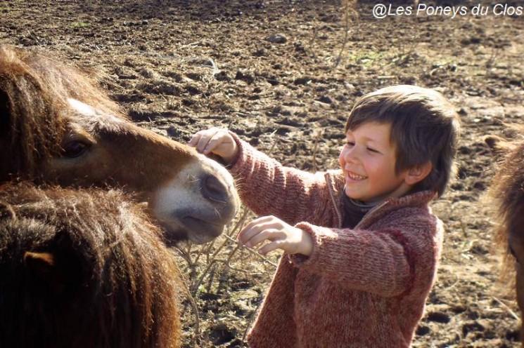 Les poneys du clos à Auray