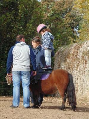 baby-poney