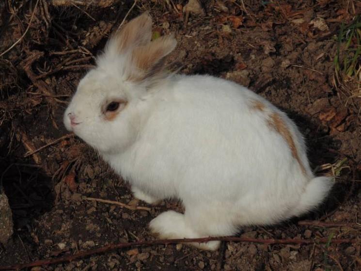 Un lapin du Clos des multipattes