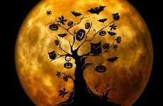 halloween-citrouilles