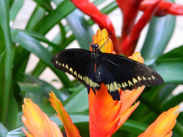 On a test le jardin aux papillons vannes r cr atiloups for Jardin hamel papillon 2016