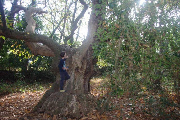 Découverte d'arbres étonnants