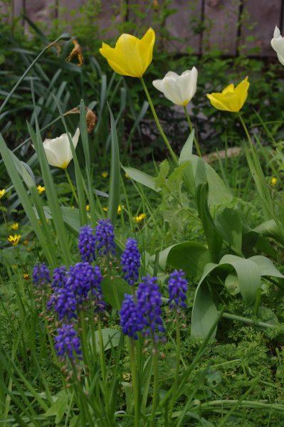 Le printemps a Saint-Niau