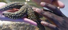 aquarium-vannes-morbihan