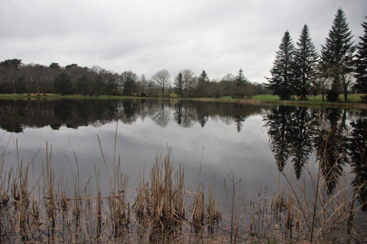 Balade autour des étangs