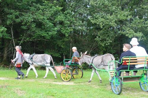 Balades en carrioles avec les ânes