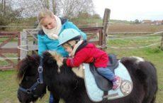 equitanime-poney-avec-bebes