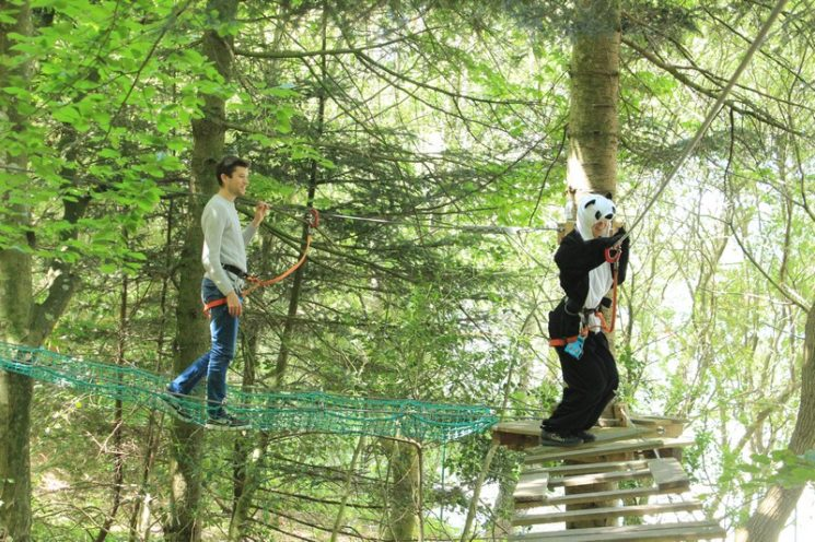 Parcours dans les arbres pour enfants et adultes